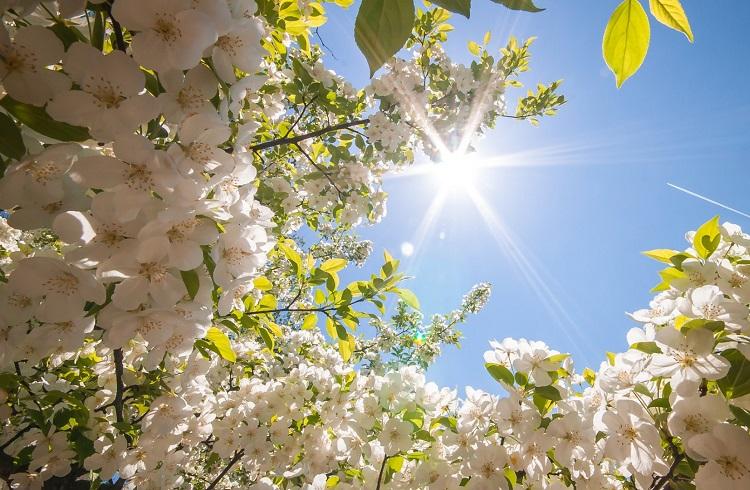 Baharla Birlikte Mutluluğu Karşılamak İsteyenlere Öneriler