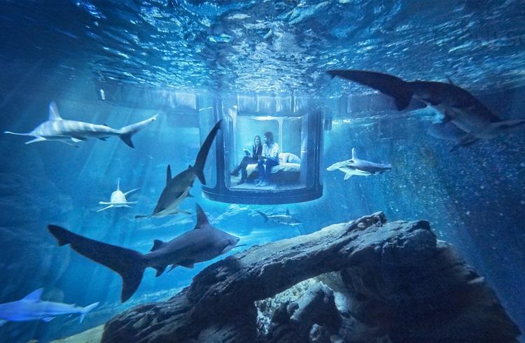 """Su Altında Muhteşem Konaklama Hizmeti: """"Aquarium de Paris"""""""