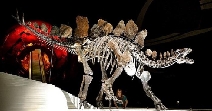 150 Milyon Yıllık Dinozor İskeletinin Özellikleri