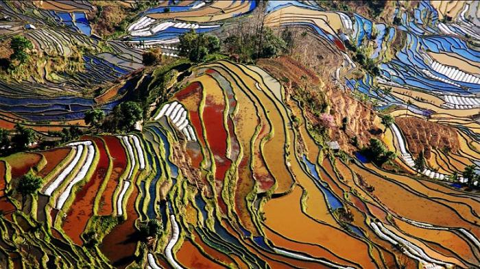 Yuanyuang Pirinç Tarlaları - Çin