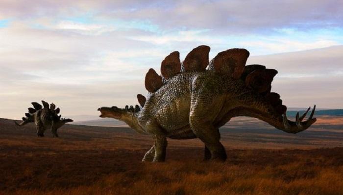 Karmaşık Bir Dinozor Türü: Stegosaurus