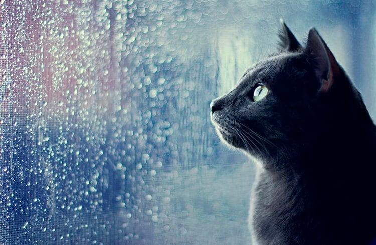 Yağmurlu Günler için En Eğlenceli Motivasyon Yöntemleri
