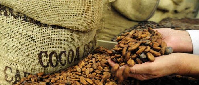 Kakao Yatırımı için Forex Piyasası Mantıklı mıdır?