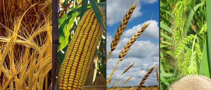 Tarımsal Emtia Yatırımı için Forex Piyasası Mantıklı mıdır?