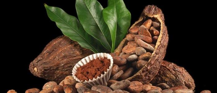 Kakao İşlemleri ile Forex Para Kazandırır mı?