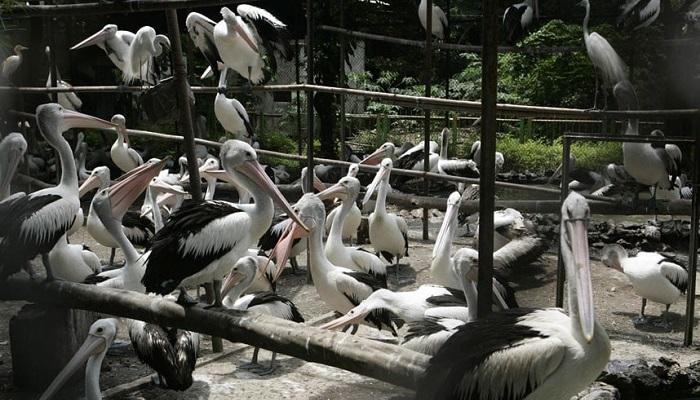 Basket Sahasına Sığdırılmaya Çalışılmış Pelikanlar