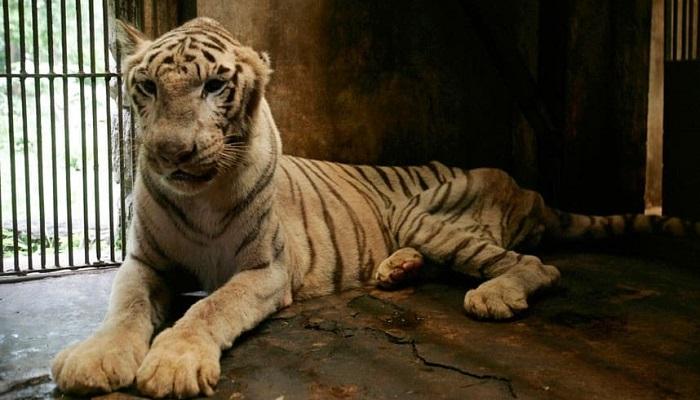 Bu Hayvana Sahip Olmak Bile Büyük Bir Şansken Bu Hale Getirmek…