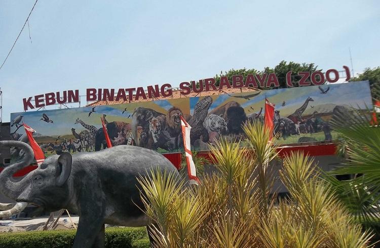 Endonezya'daki Bu Hayvanat Bahçesi, Hayvanları Ölümle Burun Buruna Getiriyor