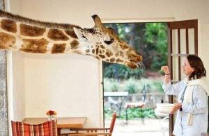 Hayvanseverlerin Mutlaka Ziyaret Etmeleri Gereken En İyi Doğa Otelleri