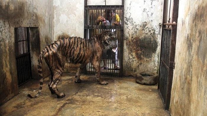 """""""Ölümlerin Hayvanat Bahçesi"""" Olarak da Bilinen Endonezya'daki Subaraya Hayvanat Bahçesi"""