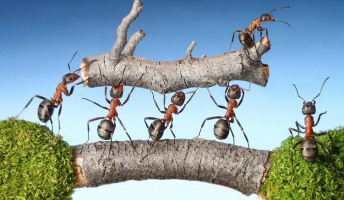 Başarılı Bir Çalışma Ekibi Kurmanın Yolları