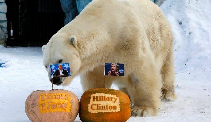 Donald Trump'ın Başkan Seçileceğini Tahmin Eden Kahin Hayvanlar
