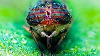 Dünyanın En Güzel Gözlü 35 Hayvanı ve Birbirinden Etkileyici Fotoğrafları