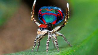 Dünyanın En Renkli Hayvanları: Güzelliği ile Gözlerinizi Kamaştıracak 50 Farklı Tür ve Fotoğrafları