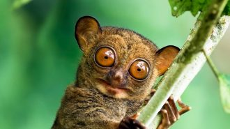 Hayvanlar Hakkında İlginç ve Şaşırtıcı 100 Gerçek Bilgi