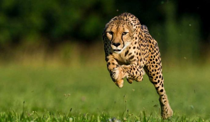 Dünyanın En Hızlı 10 Hayvanı ve Takip Edilmesi Zor Hareketleri