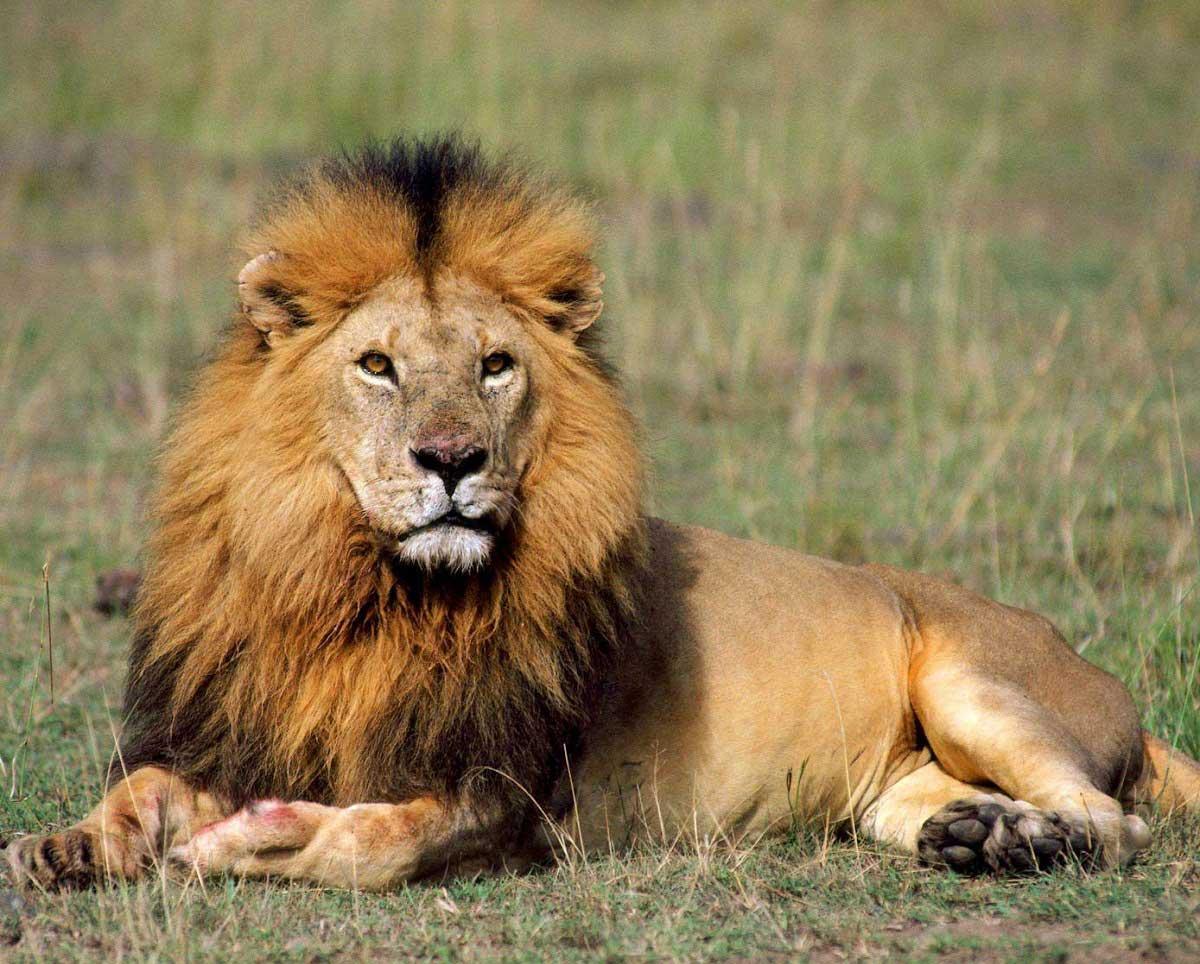 Dünyanın En Korkunç 55 Hayvanı Ve Tüyler ürperten özellikleri Paratic