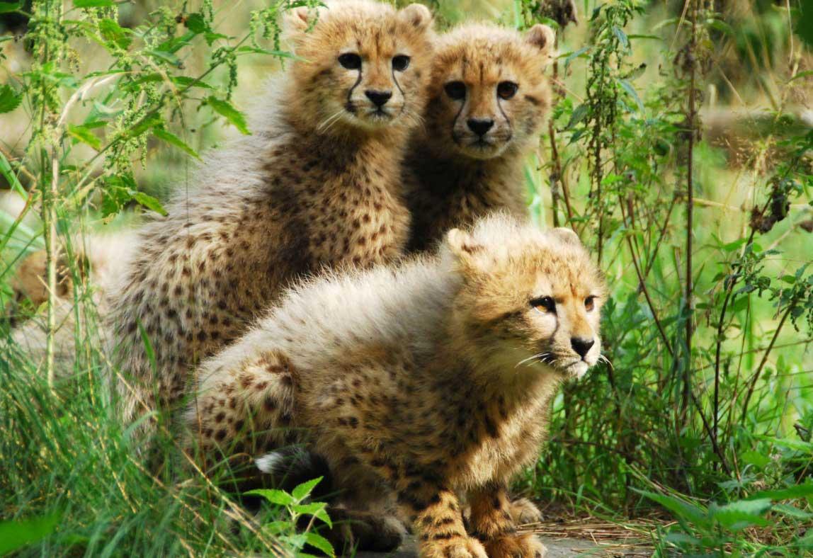 Yavru Hayvanlar Içinizi Isıtacak 50 Fotoğraf Ve Yüzünüzü Güldürecek