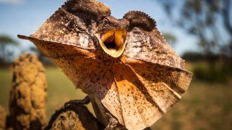 Dünyanın En İlginç 65 Hayvanı ve İnanılmaz Özellikleri