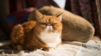 Kedi Cinsleri: En Beğenilen 55 Tür ve Özellikleri