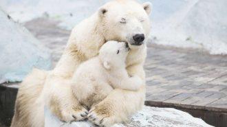 Yavru Hayvanlar: İçinizi Isıtacak 50 Fotoğraf ve Yüzünüzü Güldürecek Sevimli Halleri