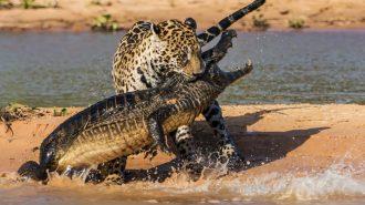 Hayvanların İzlemeye Doyamayacağınız Muhteşem Görüntüleri