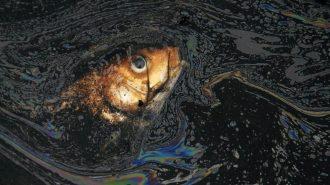 Petrol Balıkların Sarhoş İnsan Gibi Davranmasına Neden Oluyor