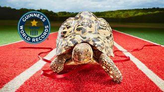 Guinness Rekorlar Kitabı'na Giren Dünyanın En Hızlı Kaplumbağası