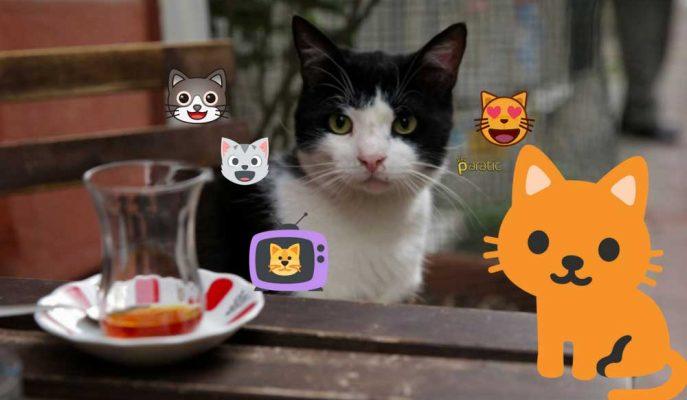 """Amerika'da En Çok İzlenen Türk Filmi """"Kedi""""yi Seyretmek İçin 10 Neden"""