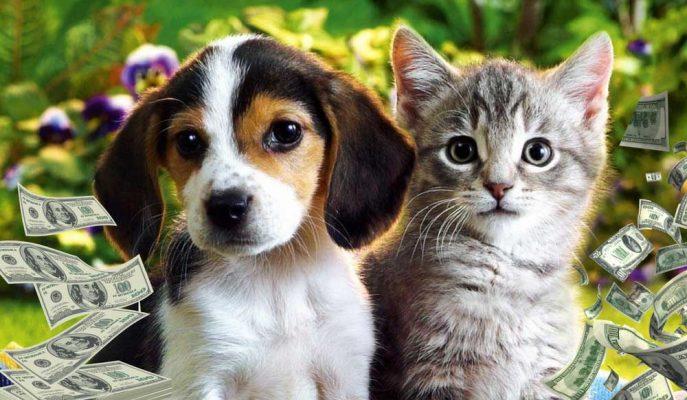 Dünya Evcil Hayvan Pazarı Şaşırtıcı Rakamlara Ulaştı!