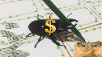 Ünü Hızla Yayılan Ressam Böcek Binlerce Dolar Kazanıyor!