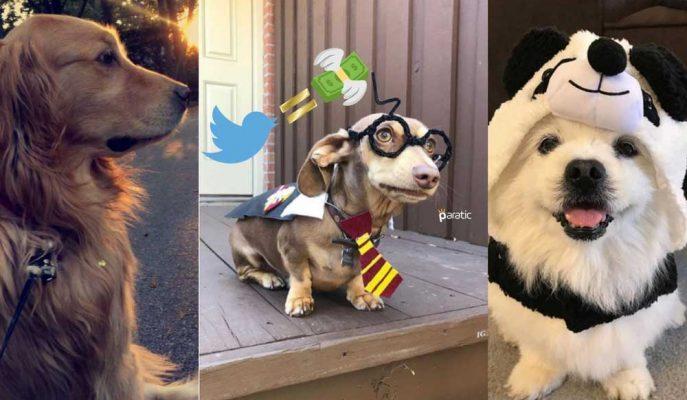 Yaratıcı Genç Twitter Hesabını Dünyanın En Eğlenceli İşine Dönüştürdü!