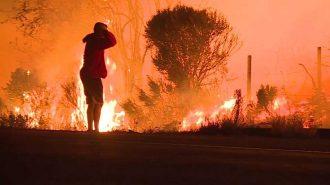 Orman Yangını Sırasında Tavşanı Kurtarmanın Peşine Düşen Yürekli Adam