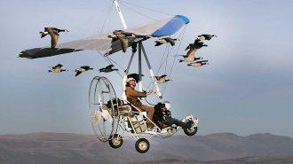 Kuş Sürüsüyle Birlikte Uçan Adamın Yaşadığı Deneyime Tanık Olun!