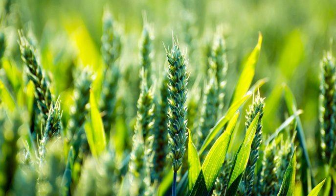 4 Milyon Hektar Nadas Alanı Tarıma Kazandırılacak