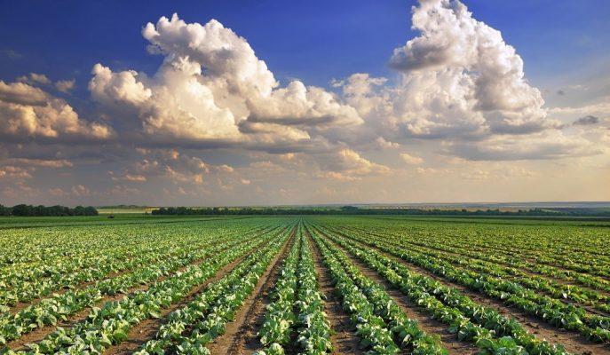 Her Şehre 3 Örnek Köy ile Tarım ve Hayvancılık Kalkınacak!