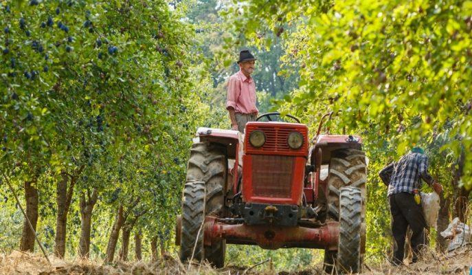 Gıda ve Tarım Bakanı'ndan Çiftçiye Erken Destek Müjdesi!