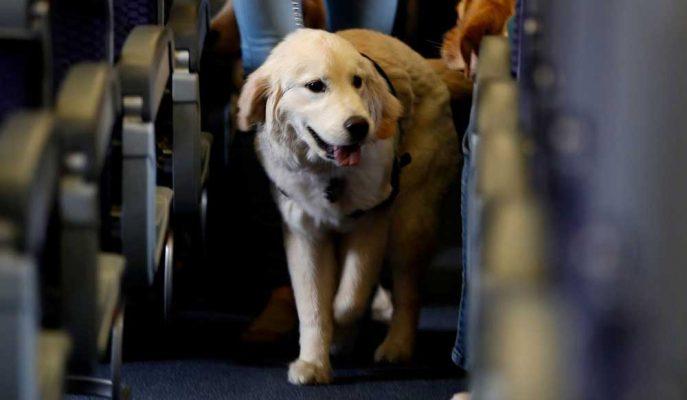 ABD'li Havayolları Problem Yaratan Duygusal Destek Hayvanlarını İstemiyor!