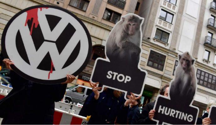 VW Dizel Testlerinde Hayvan Denek Kullanmayacak!