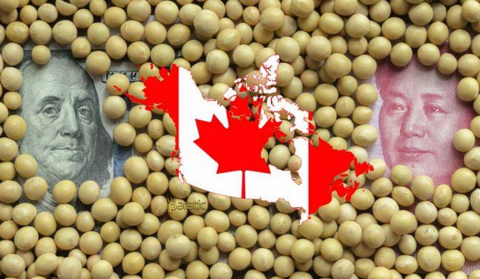 Kanadalı Soya Fasulyesi Üreticileri Ticaret Savaşının Çapraz Ateşindeler