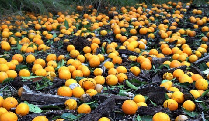 Yılın İlk Yarısında Tarım Sigortası Varlık Bedeli 28 Milyar Liraya Ulaştı