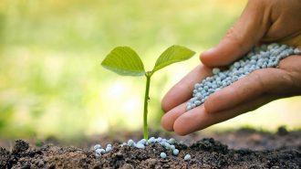 Gübrede İndirim Müjdesi Veren Bakanlık, Arpa ve Buğdayda Prim Desteğini Artırıyor