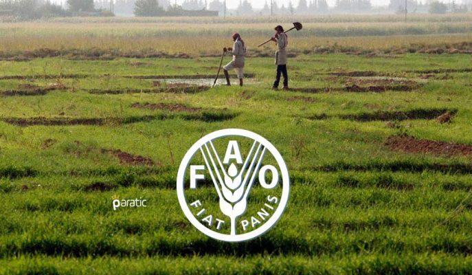 Suriye'de Buğday Üretimi 29 Yılın Dibinde! Ülke Açlık Tehdidi Altında…