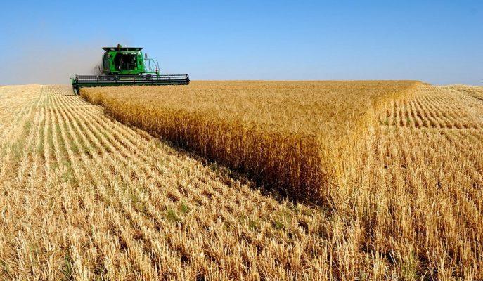 TÜİK Verilerine Göre Tarımsal Üretimde Düşüş Olacak