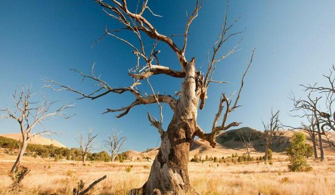 Meteoroloji Uzmanlarından İklim Değişikliğine Karşı Yeni Bir Tarım Politikası Çağrısı