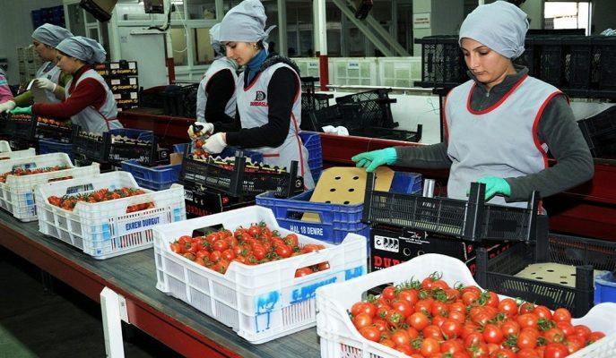 Türk Eximbank Tarım İhracatçısına 200 Milyon Dolarlık Ek Finansman Sağlayacak