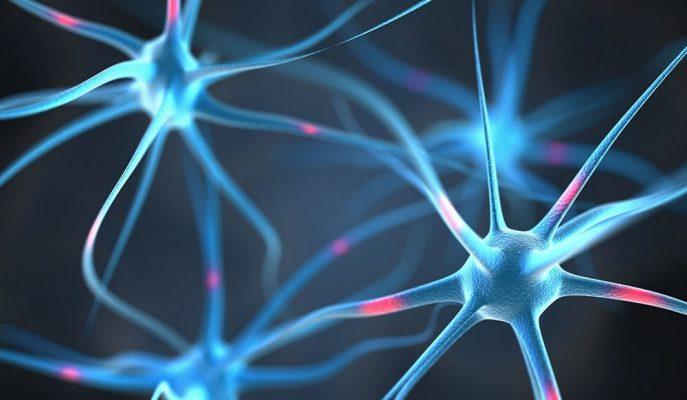 Japon SanBio Hisseleri Beyin Travması Tedavisine Yönelik Buluş ile Yüzde 155 Yükseldi