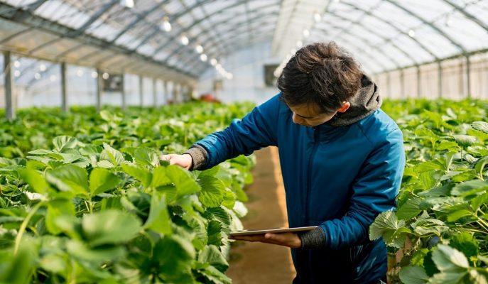 Tarım Kredi Kooperatifleri'nden Kıbrıs ile Sözleşmeli Üretim Modeli Önerisi