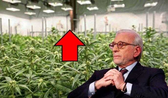 Aurora Cannabis'in Hisseleri Milyarder Nelson Peltz'i Danışman Olarak Aldıktan Sonra Yükseldi