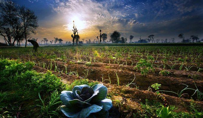 Bakan Pakdemirli: Tarımda Her Geçen Gün Hedefler Büyütülüyor